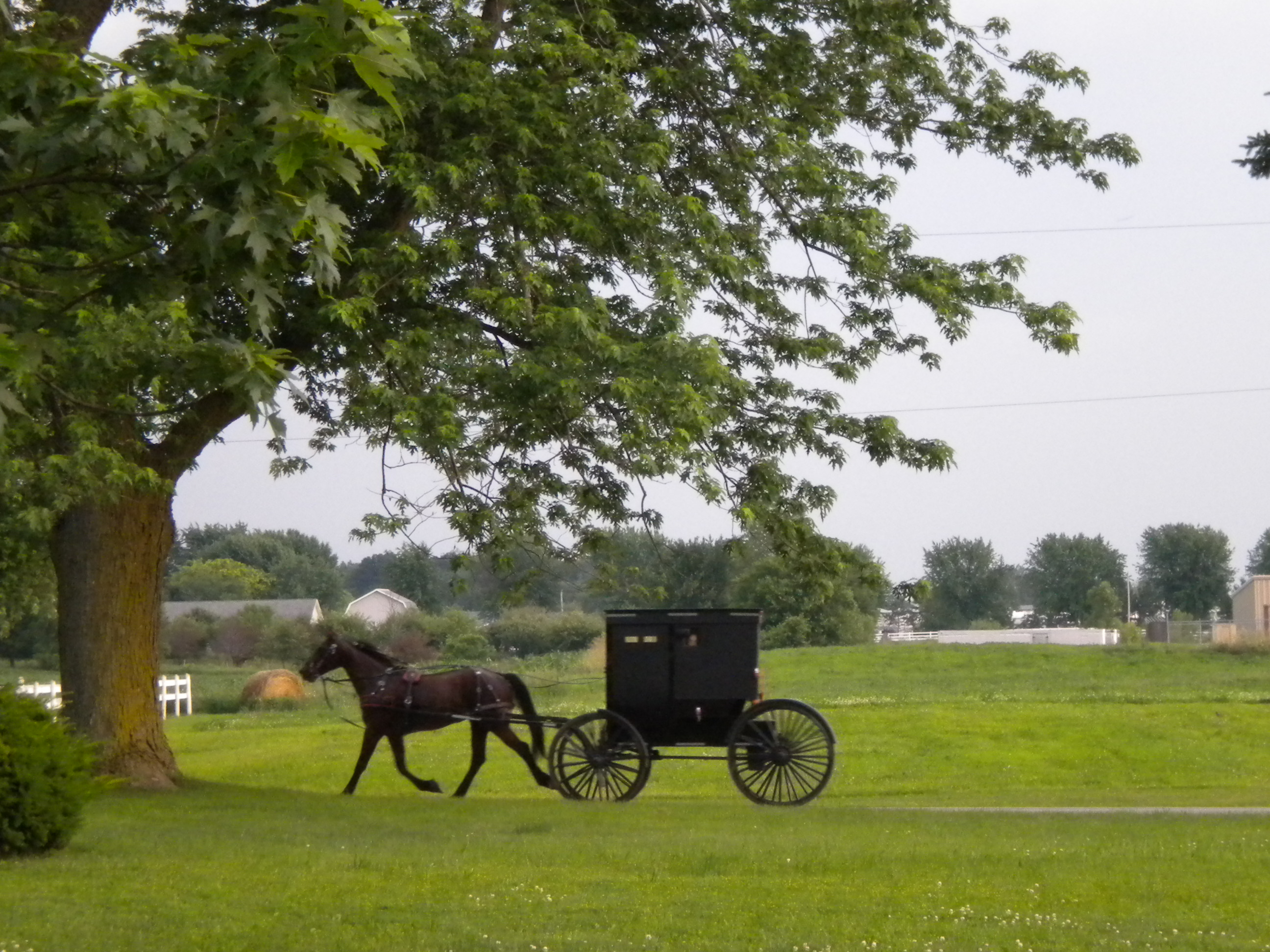 Authorities in western New York say they've charged four young Amish adults ...