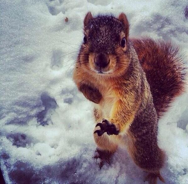 heisman squirrel